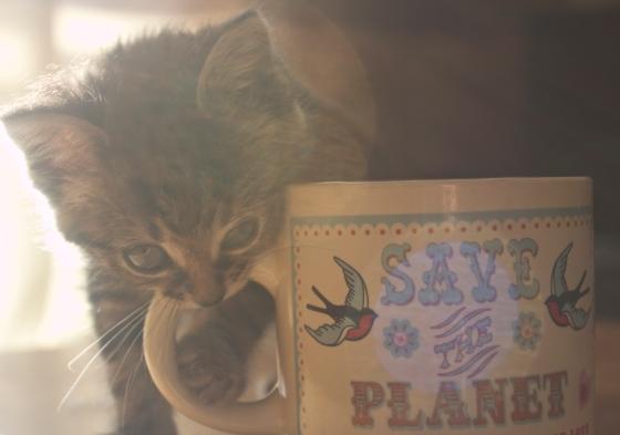 love,kitten,tea,mug,cat,cute,cuddly,food,bird,naughty,bengal