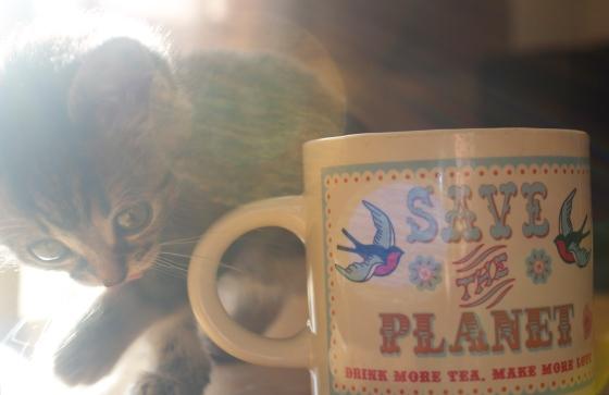 cute, kitten, cat, bengal, tea, drinking, naughty,