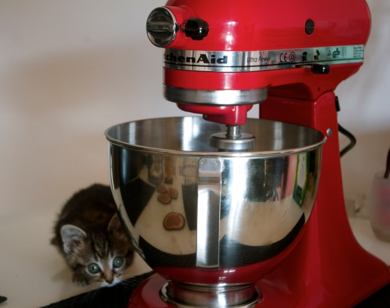Kitchenaid, mixer, empire, red, kitten, cat, food