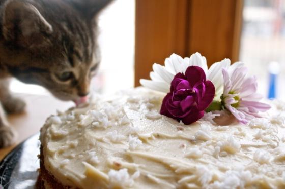 cake, coconut, kitten, bengal, licking, cat, flower, jasmine, tea, butter, cream, frosting, gluten, free