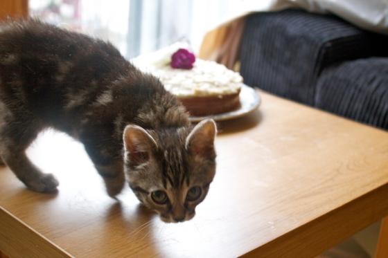 kitten, bengal, cat, got, the, cream, butter, buttercream, frosting, cake, coconut, gluten, free, tea