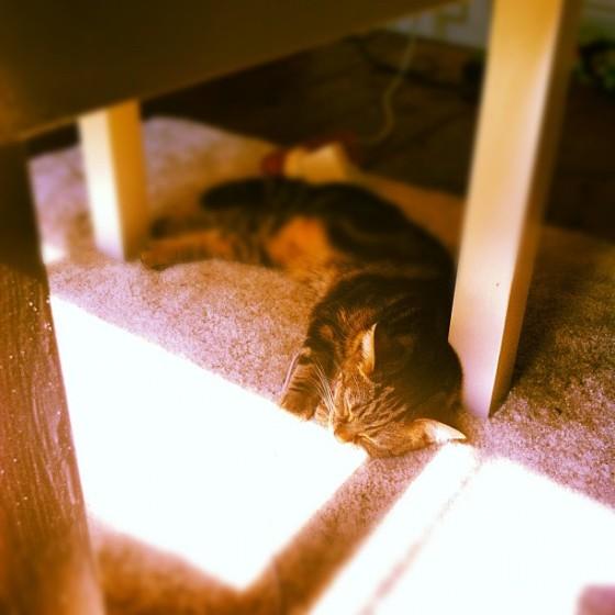 cat, sunshine, hot cat, kitten, cute, lying in the sun,