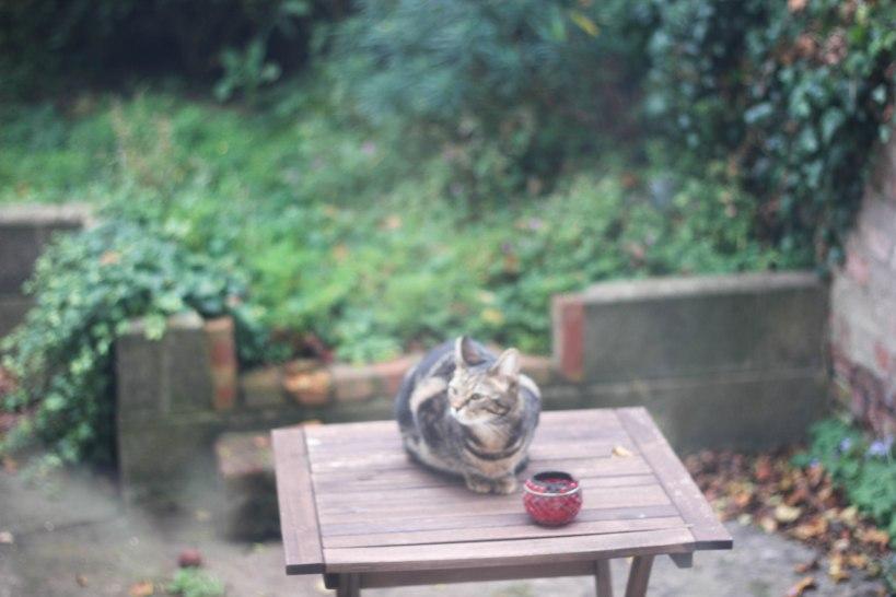 cat, garden, sitting
